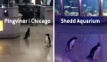 Chicago Shedd Aquarium har nye besøgende